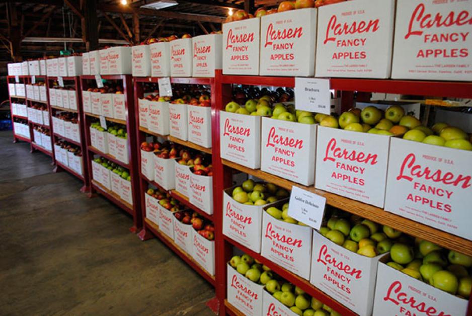 Регистраторы температуры фрукты